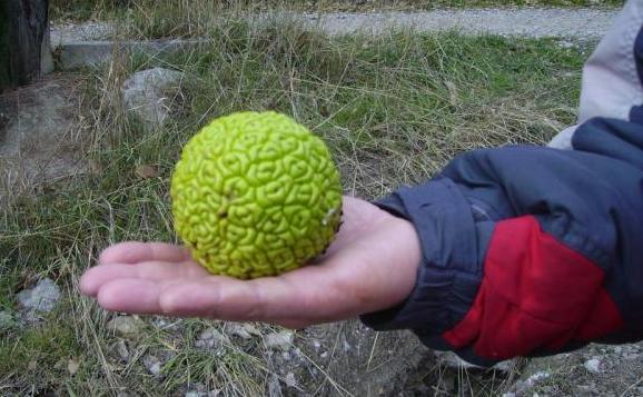 abloko-apelsi…bochka-eto-zhe.