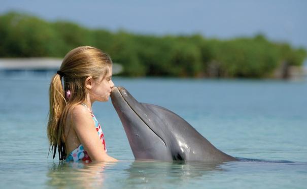 o-loshadyah-i-delfinah.