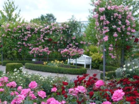 rozovyiy sad Давайте вырастим розы!
