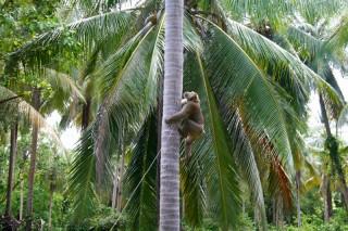 za orehami Ох уж эти обезьяны!