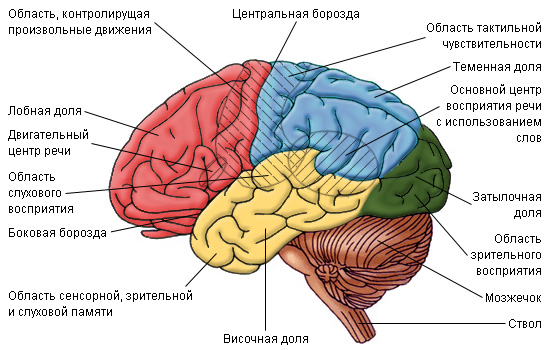 Golovnoy mozg Улучшаем работу головного мозга!