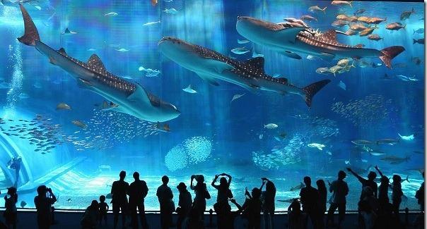 aquarium1 В отпуск с фотоаппаратом – конечно!