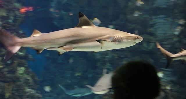 i-prochie-krasotyi-akvariuma