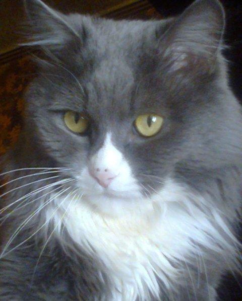 Foto07241 О хитростях кошачьих и прочих…