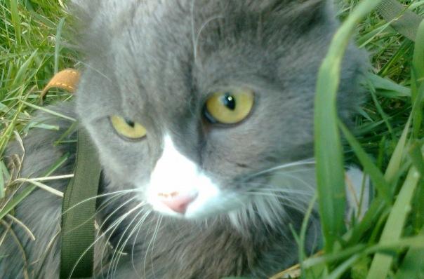 x 88524cbc О хитростях кошачьих и прочих…