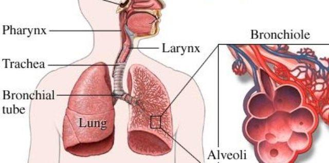 zabolevanie-bronhit