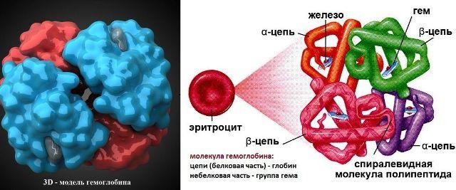 chto-oznachaet-gemoglobin