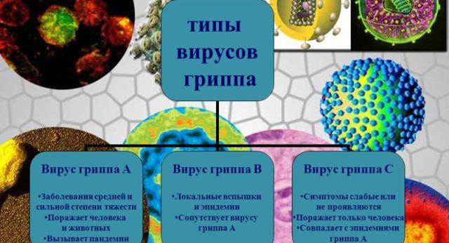 virus Почему опасен грипп