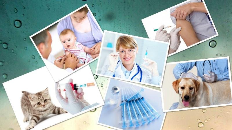 perv1 Прививки домашним животным
