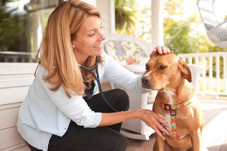 Про ветеринарную службу